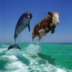 Si vous voyez deux dauphins, tout va bien